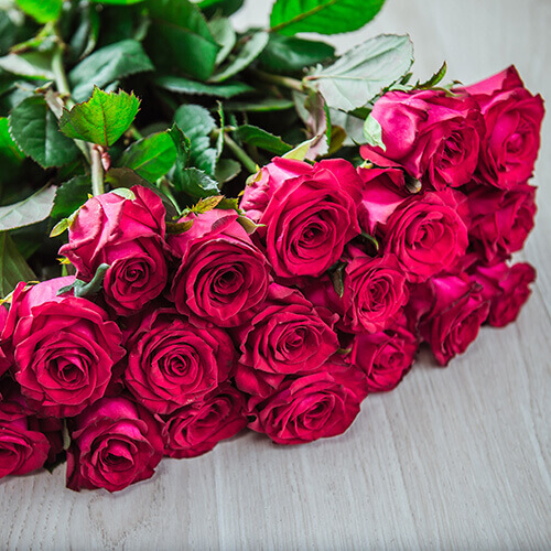 Бордовая роза (Россия)