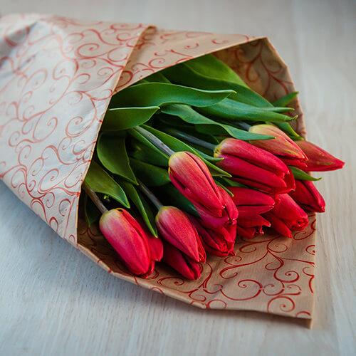 Красные тюльпаны (Голландия)