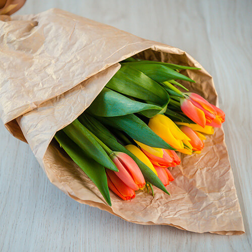 Оранжевые тюльпаны (Голландия)