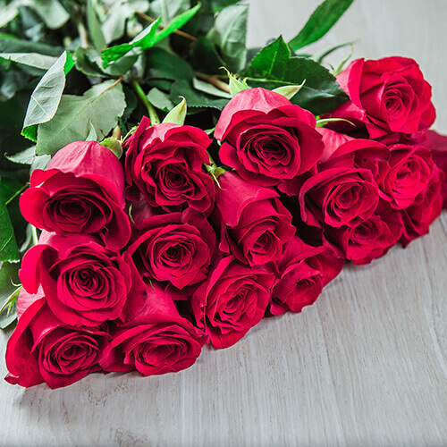 Красная роза (Эквадор)