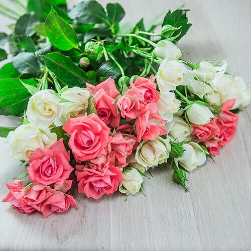 Кустовая роза светлых оттенков