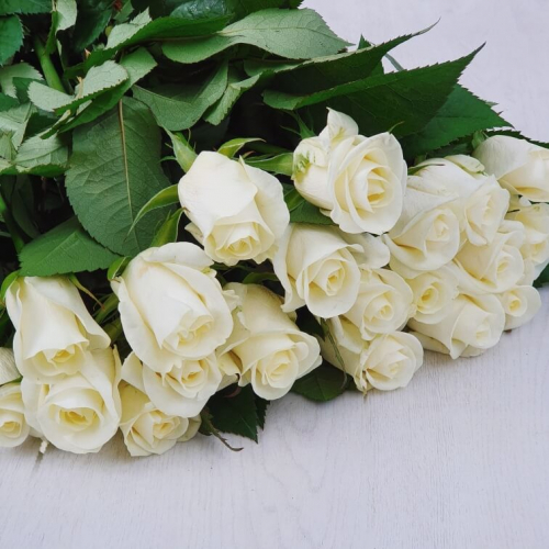 """Роза """"Белуга"""""""