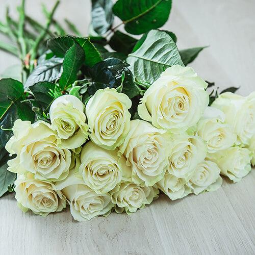 Белая роза (Эквадор)