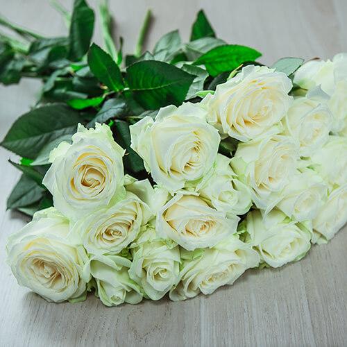 Белая роза (Россия)