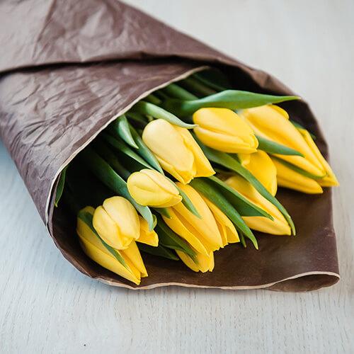 Жёлтые тюльпаны (Голландия)