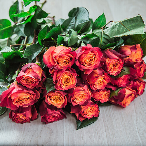Двухцветная роза (Эквадор)