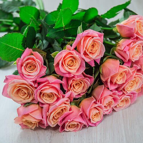 Кораллово-розовая роза (Россия)