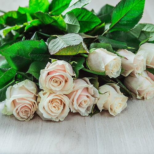 Кремовая роза (Россия)