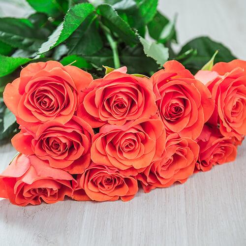 Лососёво-розовая роза (Кения)