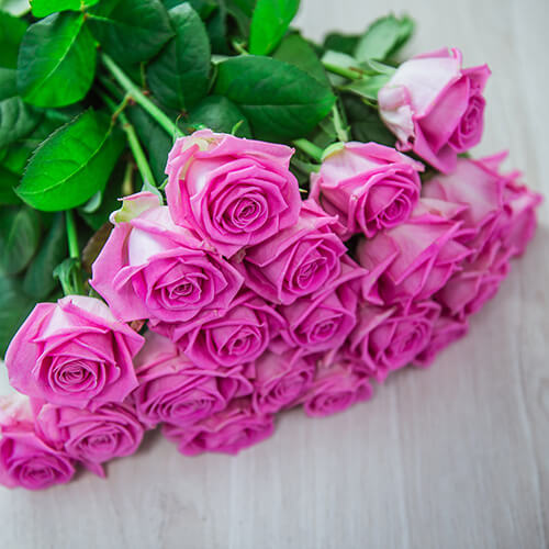 Розовая роза (Россия)