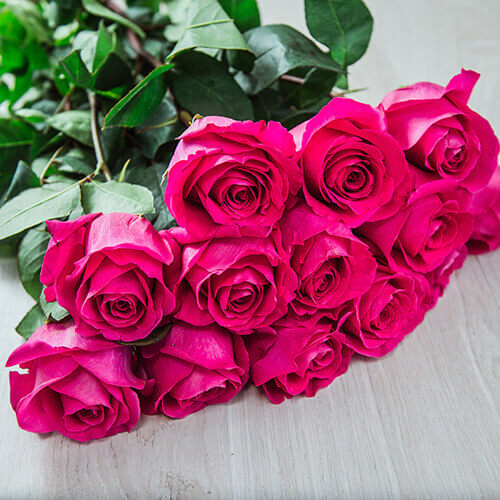 Ярко-розовая роза (Эквадор)
